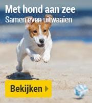 Weg met hond aan zee