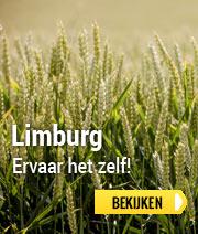 Limburg België